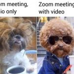 10 Funny and Legit Video Conferencing Memes For Every Employee