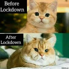 before and after lockdown memes - 11